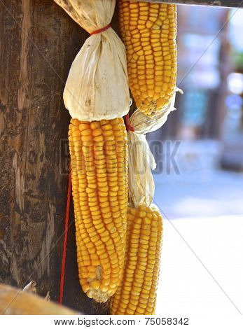 The cluster of corn hanging to dry