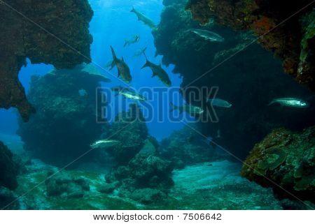 Tarpon in a sea grotto