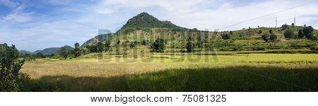 Panorama Of Rice Paddies