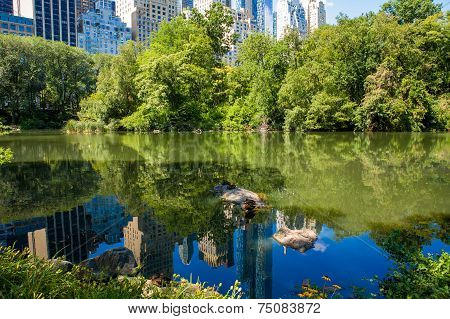 The Pond in Central Park