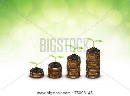 trees growing on coins