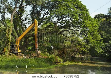 Destruction Of Forest, Environment