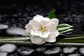 stock photo of gardenia  - Spa still with gardenia flower with long leaf on pebbles  - JPG