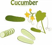 picture of cucurbitaceous  - set of cucumbers isolated on an white background - JPG