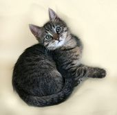 image of yellow tabby  - Tabby and white kitten lying on yellow background - JPG