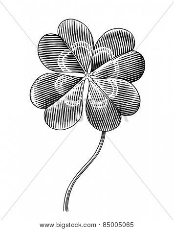 Engraved illustration of four leaf clover