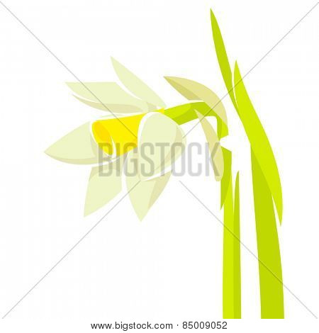 Narcissus stylized flower