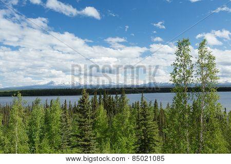 Willow Lake Landscape