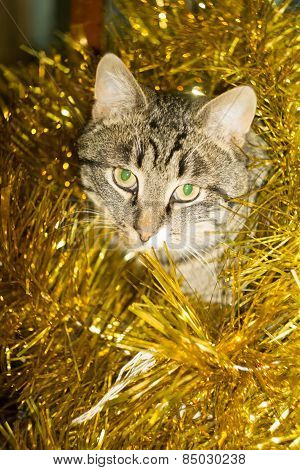 Tabby Cat And Yellow Tinsel