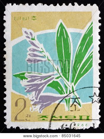 Postage Stamp North Korea 1966 Hosta, Herbaceous Perennial Plant