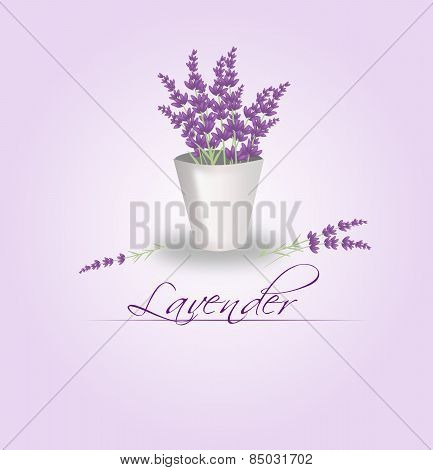 Lavender Bunch In Flowerpot
