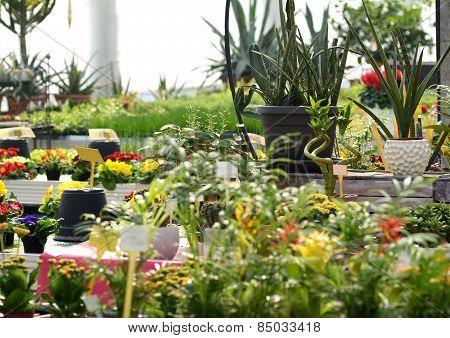 Various Flowering Plants Growing In A Nursery