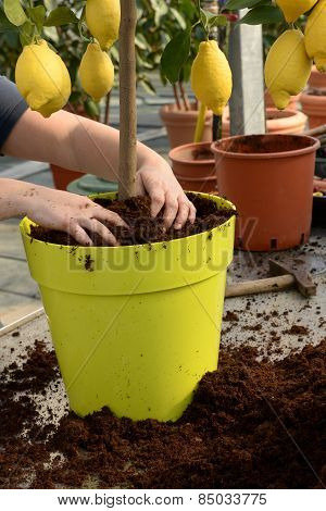 Gardener Potting A Plant