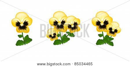 Yellow Heartsease