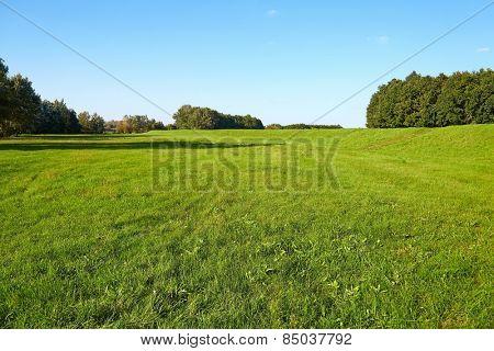 Green field in bright summer