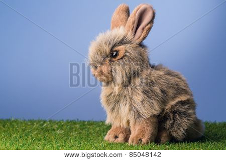 Grey bunny rabbit on green grass