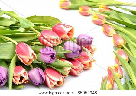 A beautiful pattern Colorful flowers arrangement bouquet of tulips on a white background