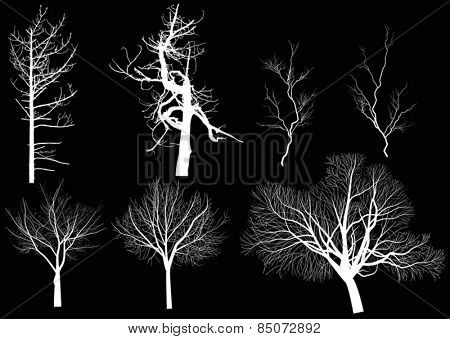 illustration with set of bare trees isolated on black background