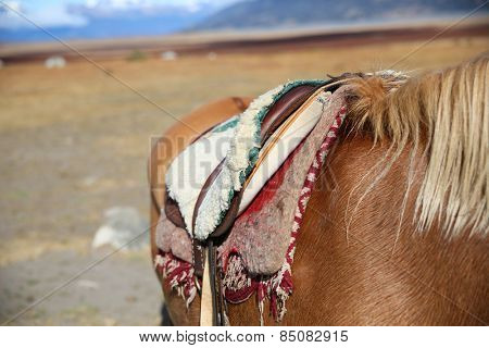Closeup of horse saddle in Patagonian steppe, Argentina