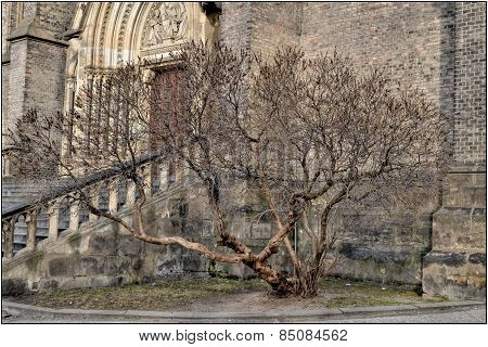 Tree at the church