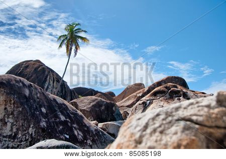 One Tall Palm Tree at Boulders on a Tropical Climate Located in The Baths on the Beautiful Island of Virgin Gorda among British Virgin Islands.