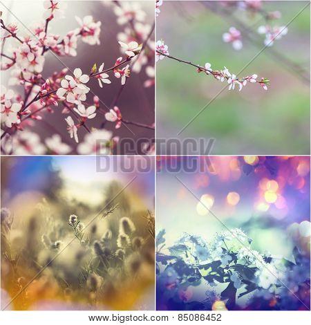 Spring garden collage