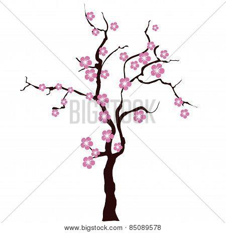 Sacura tree