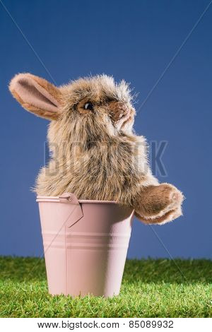 Bunny rabbit in pink bucket on green grass
