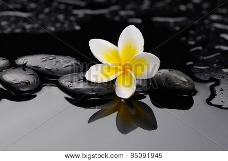 Zen wet stones and frangipani