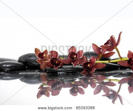 Still life with wet stones with branch red orchid