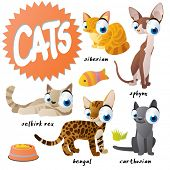 picture of carthusian  - vector cartoon cat set breeds - JPG