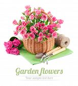 stock photo of bunch roses  - Bunch pink roses in basket with garden tools - JPG