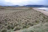 pic of dune grass  - view of dunes at the maharees a beautiful beach in county Kerry Ireland - JPG