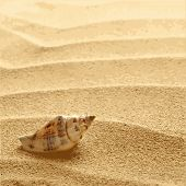 picture of shells  - sea shells with sand as background vector EPS8 - JPG
