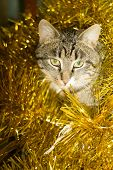 picture of yellow tabby  - Cute tabby cat in Christmas yellow tinsel holiday background - JPG
