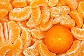 image of mandarin orange  - whole mandarin orange among many mandarin slices - JPG