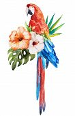 picture of tropical birds  - Beautiful vector set with nice watercolor tropical birds - JPG
