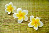 foto of frangipani  - Three frangipani flower on green mat - JPG