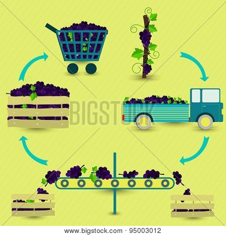 Process Of Grape