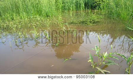Flooded Plants