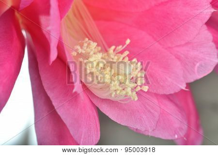 Inside Flower