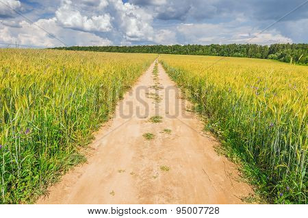 Field With Rye And Road.
