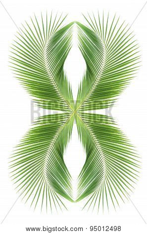 Abstract coconut leaves background