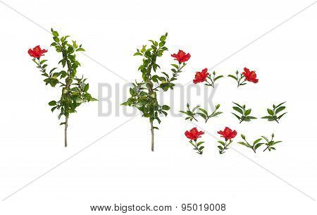 Hibiscus branches and leaves isolated