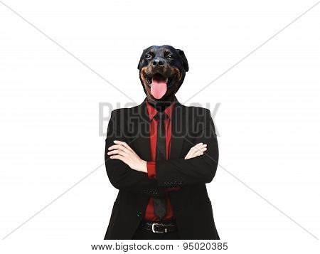 Rottweiler Dog Dressed Up As Formal Business Man