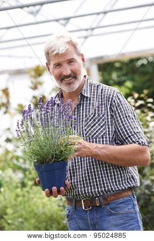 Mature Man Choosing Plants At Garden Center
