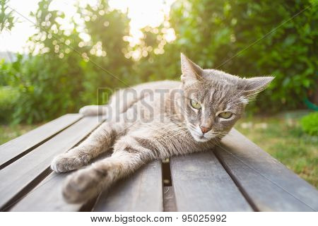 Cat Lying On A Wooden Bench In Backlight