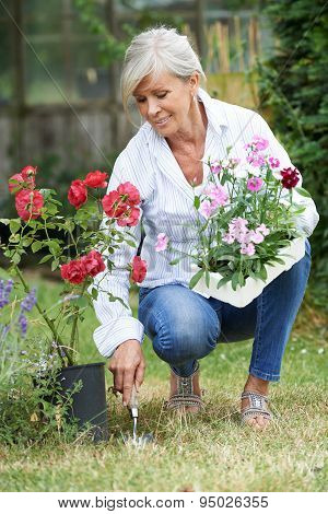 Mature Woman Planting Out Plants In Garden