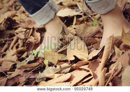 Bare Feet On Dry Leaves