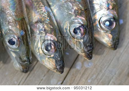 Four Baltic Herring